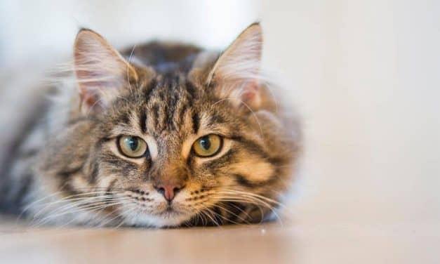 Soft kitty, warm kitty – najfajniejsze serialowe koty