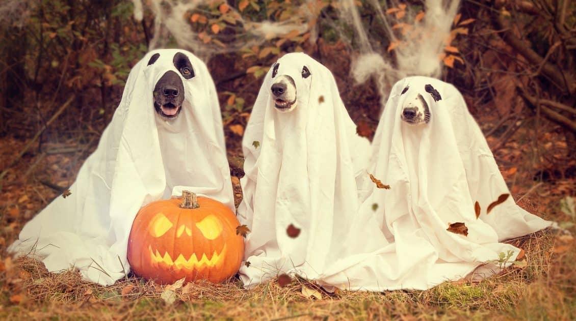 DIY Halloween - serialowy - pixabay license free use
