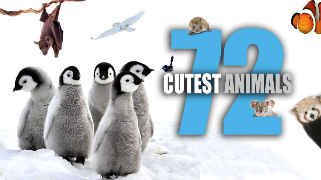 72 cutest animals for web
